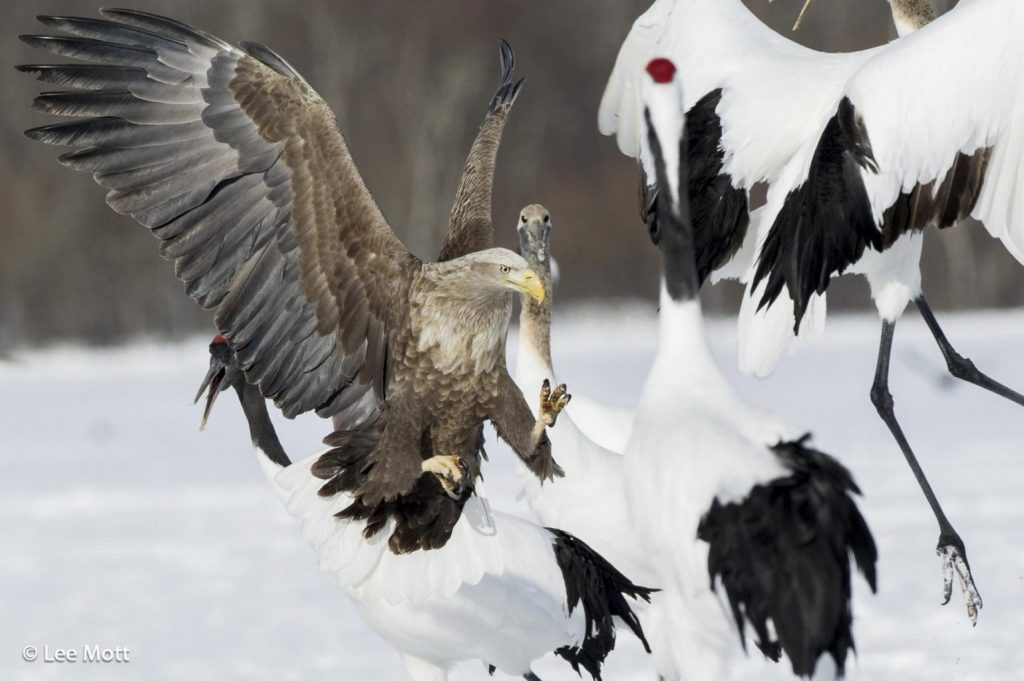 polish eagle crane